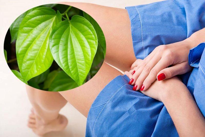 Lá trầu không chữa viêm âm đạo do nấm hiệu quả