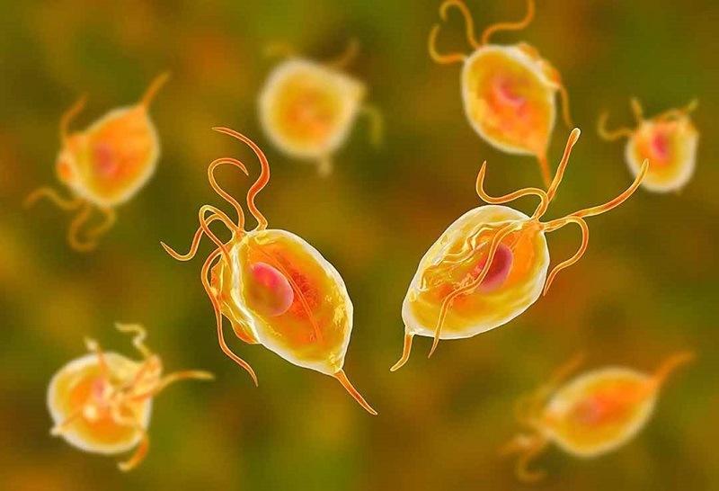 Vi khuẩn, nấm, trùng roi,... là nguyên nhân chính gây bệnh viêm âm đạo