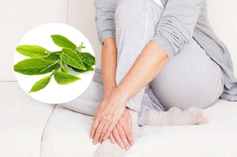 Trà xanh chứa EGCG cực kỳ tốt trong việc điều trị bệnh phụ khoa