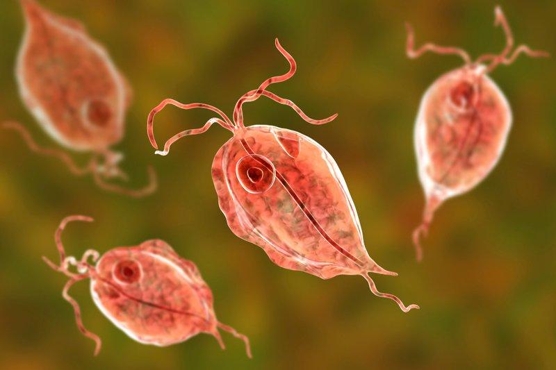 Viêm âm đạo do Trichomonas là tình trạng thường gặp và ký sinh ở cả nam và nữ giới