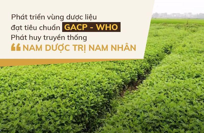 Vườn dược liệu của nhà thuốc Đỗ Minh Đường đạt chuẩn GACP - WHO ở Hòa Bình, Hưng Yên và Hà Nội