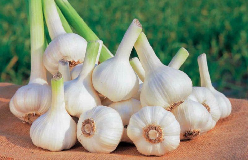 Ăn tỏi tươi là cách tốt nhất chữa bệnh nấm âm đạo từ bên trong